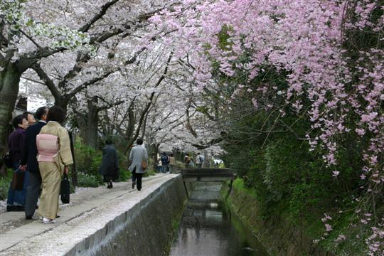 Japonija. Kioto. Tetsugaku No Michi