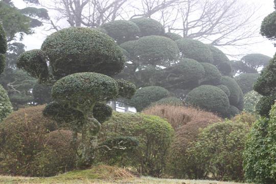 Japonija. Moto-Hakone rūmų sodas