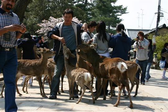 Japonija. Nara parkas