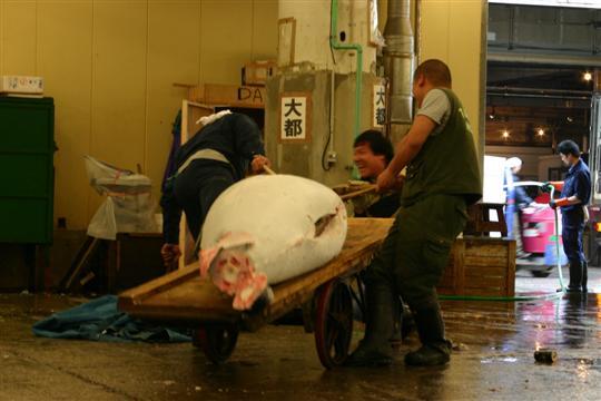 Japonija. Tokijas. Tuna Tsukiji žuvies turguje
