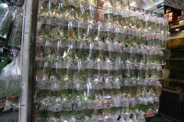 Honkongo akvariuminių žuvelių turgus (Goldfish market)