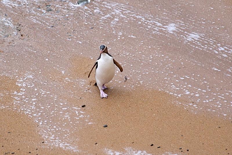 Apsilankymas pas pingvinus