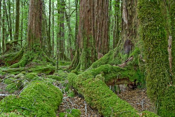 Apsamanojęs miškas Fiordų nacionaliniam parke